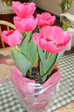 take tulips to an elderly person